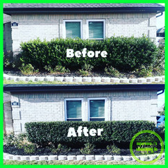Shrubs Trimmed in Kennendale, TX