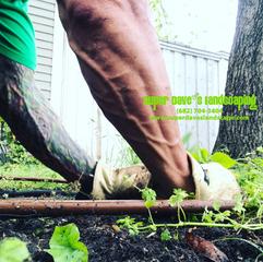 Pulling Weeds in Dallas, TX