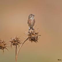 The birds of Emek Ayalon fields
