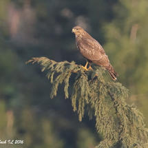 Autumn Migrations - Ben Shemen Forest