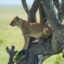 Kenya Masai Mara Nov 2013 and More