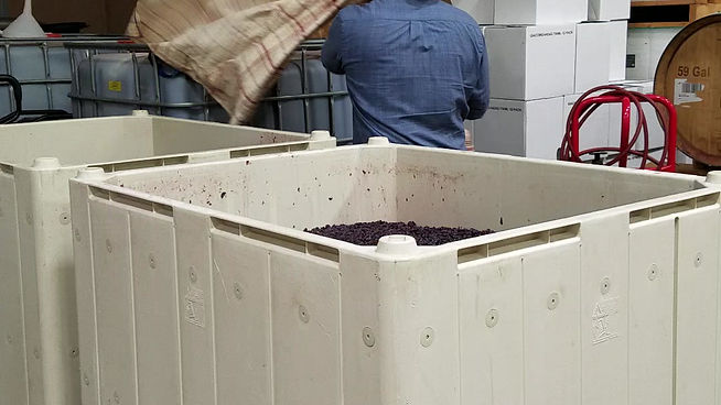 Punching down the Dolcetto