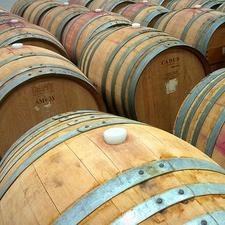 Rows of Barrels.jpg