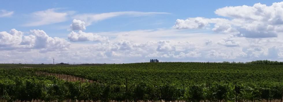 Peaceful Vineyards.jpg