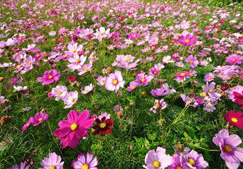 passover-spring-hp.jpg