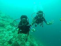 safari,cruise,diving,Aliqueen