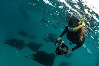 manta,UNESCO,biosphere,hanifaru