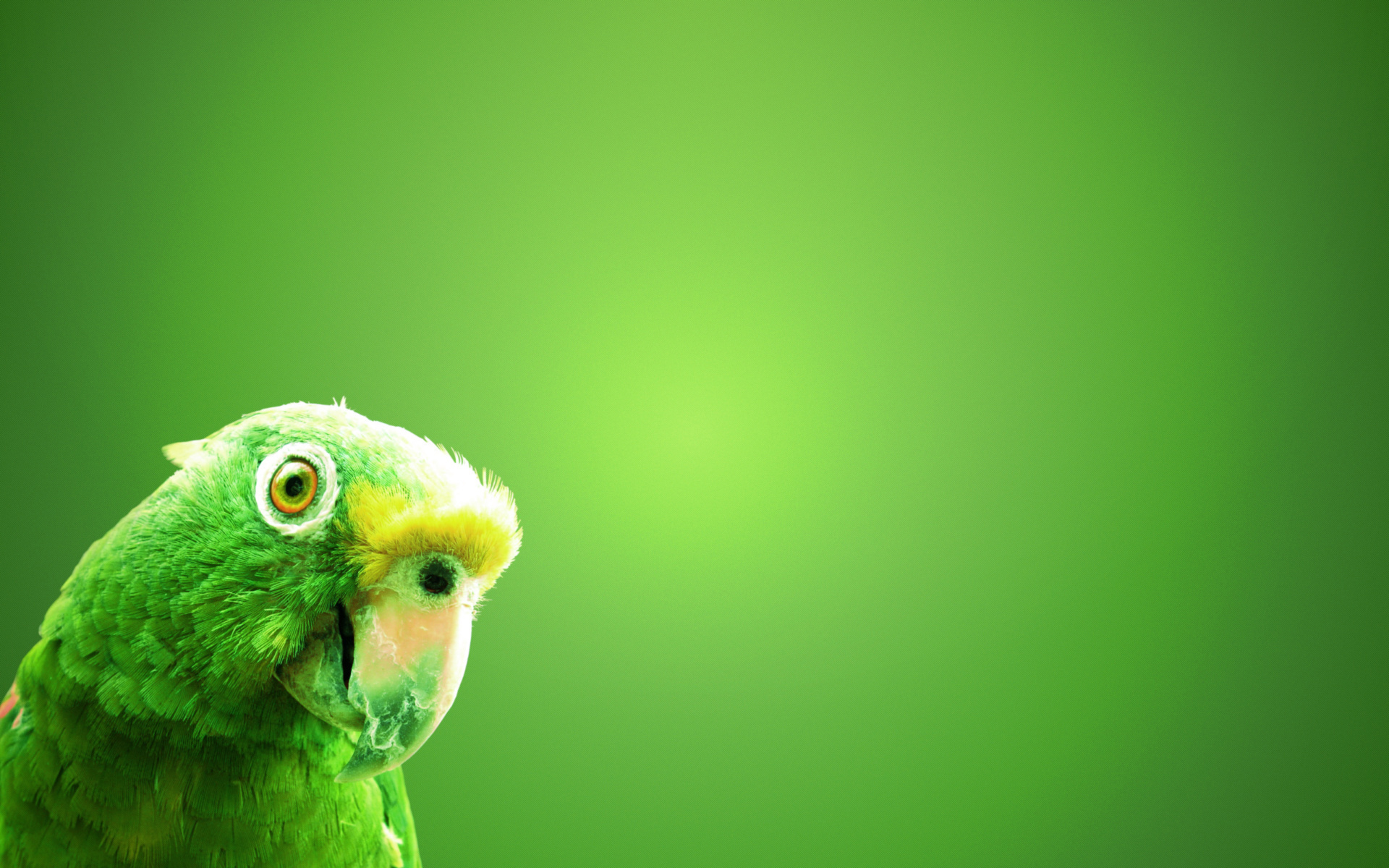 parrot green background