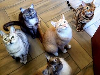 myra's cats.JPG