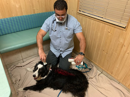 pet laser therapy carlsbad,ca
