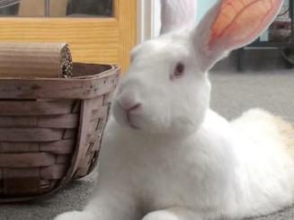 white judith pierce rabbit.JPG