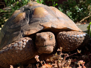 tortoisecloseup.jpg