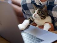 人間と動物が共生する複合シェアオフィス