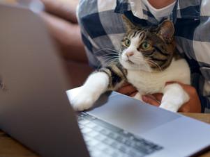 ネコが管理人の複合シェアオフィス