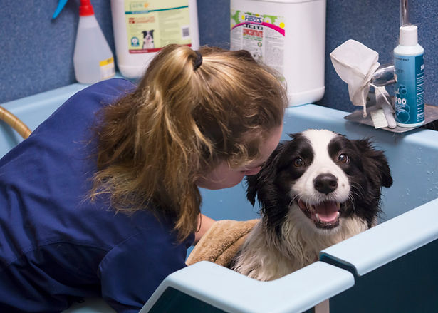 Dog getting hydrobath look how cute it i
