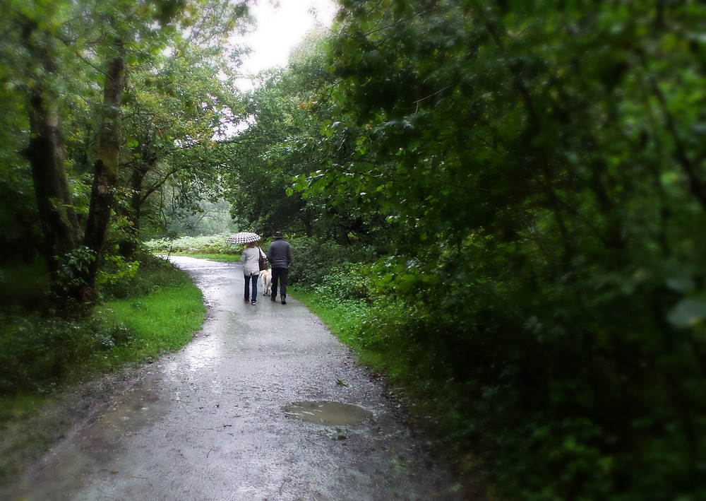 Wet weather on White Moss Walk, Cumbria