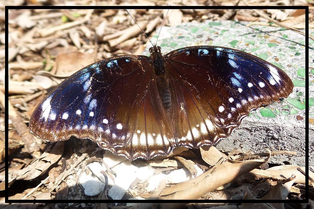 A butterfly in Taiwan