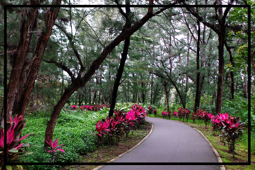 Cultivated 'wilderness' in Taitung, Taiwan