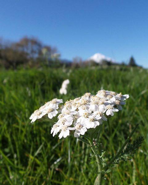 Wildflowers in Taranaki NZ