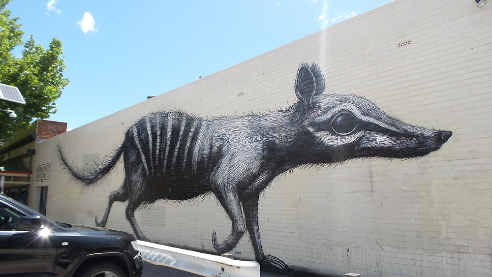 Numbat street art in Fremantle, WA