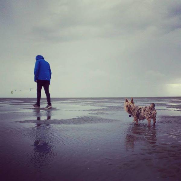 Walking Maizie the terrier in Nelson, New Zealand