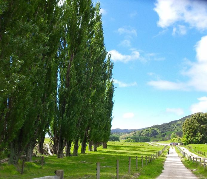 Golden Bay area of South Island NZ