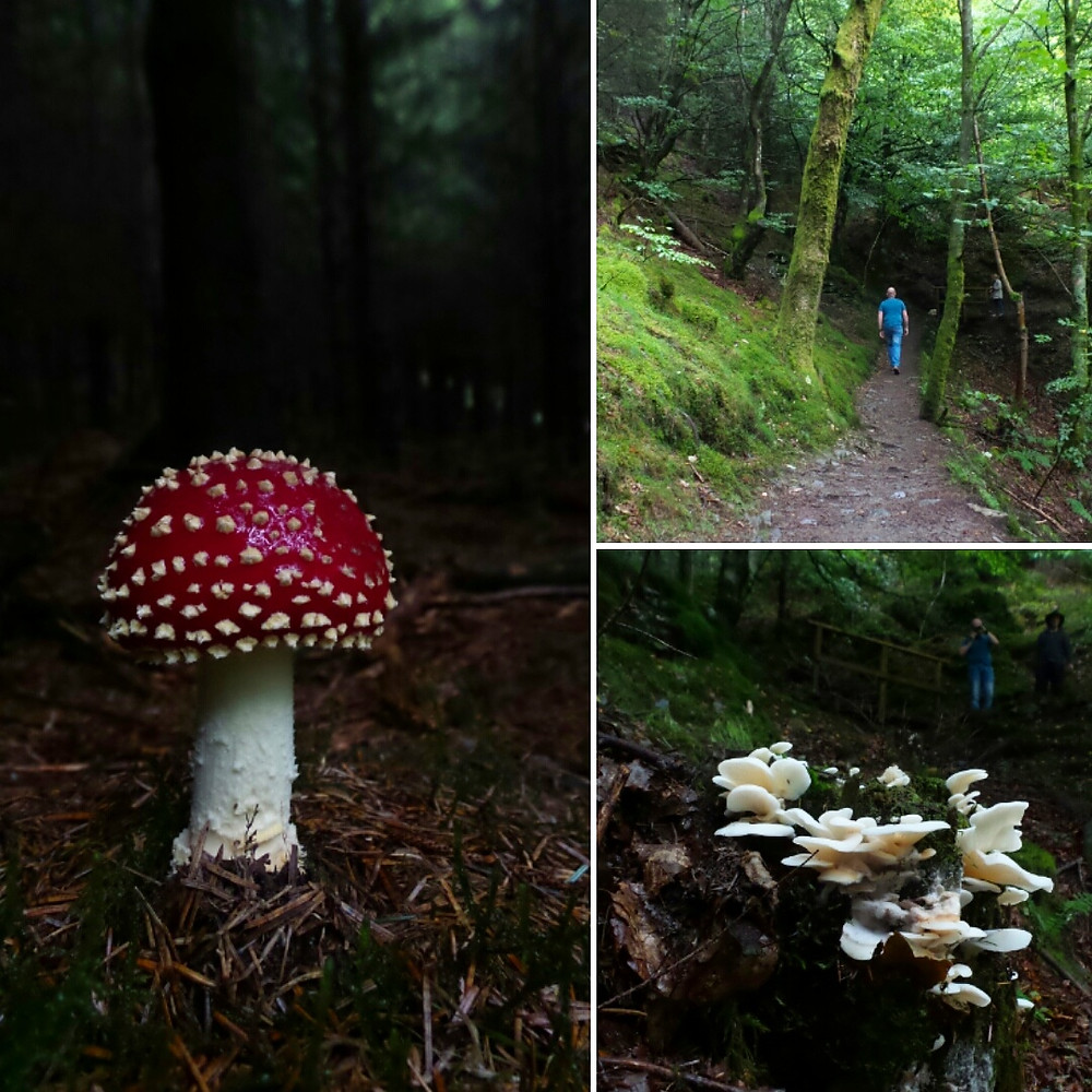 Toadstools and fungi in Dodd Wood, Lake District