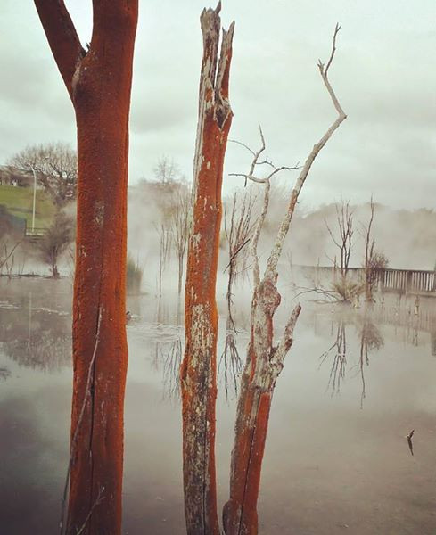 Thermal pools at Kuirau Park, Rotorua