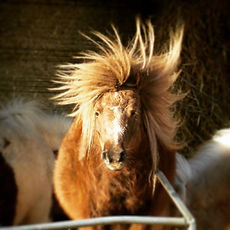Photograph of pony by Mark J Newton