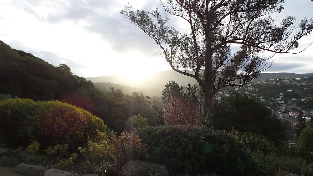 A view from the Dunedin Botanic Gardens