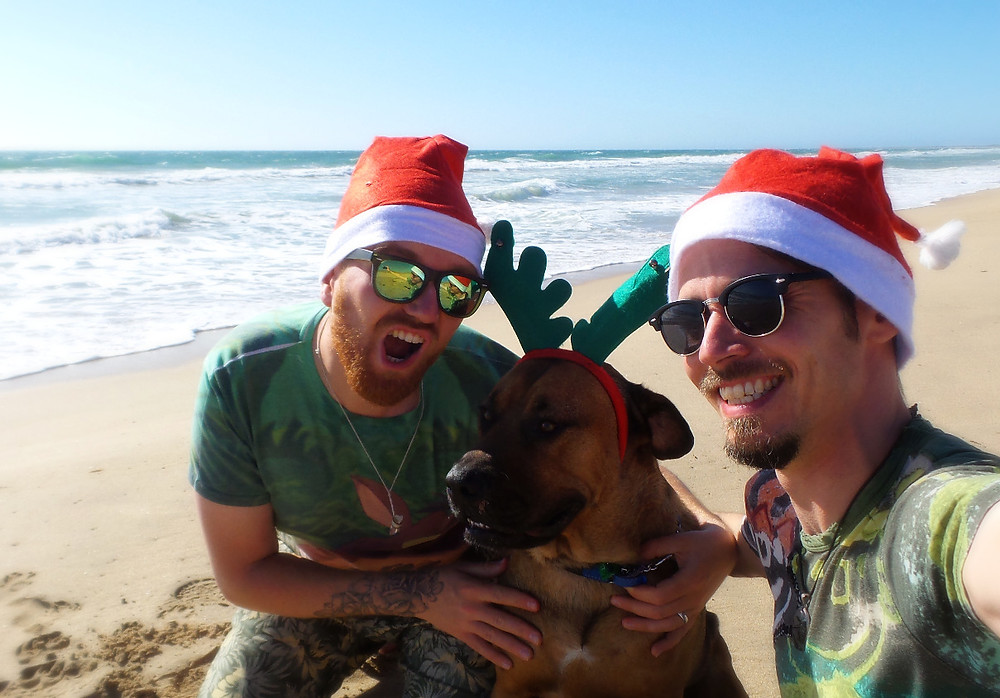 Christmas pet-sitting in Perth, Australia with Humphrey