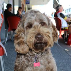 A dog we loved