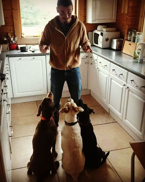 Pet-sitting in Herts, UK with three surprisingly obedient dogs