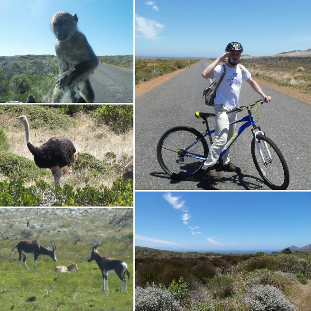 Cycling through Cape Point Nature Reserve