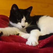 Tinko, the first cat we petsat