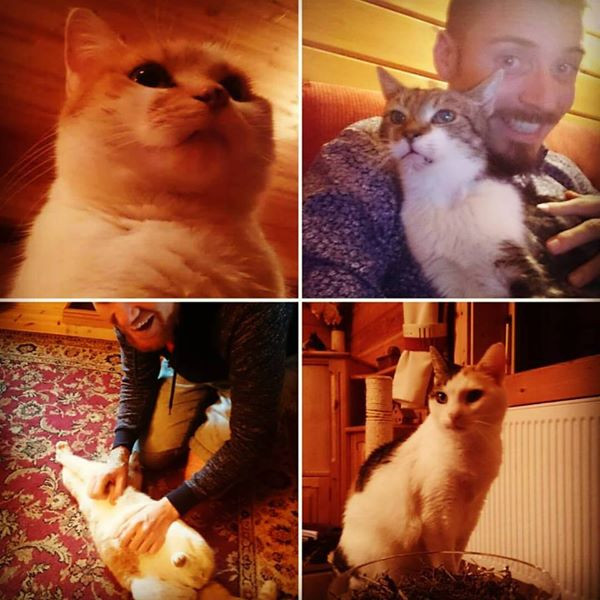 Pet-sitting the cats in Herts, UK