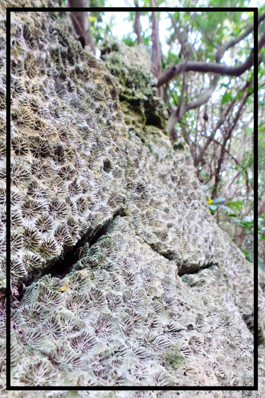 Fossilised coral at Kenting