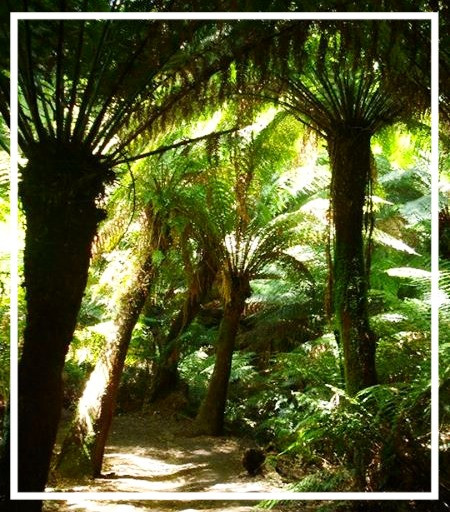 Tree ferns in Victoria on the Great Ocean Road