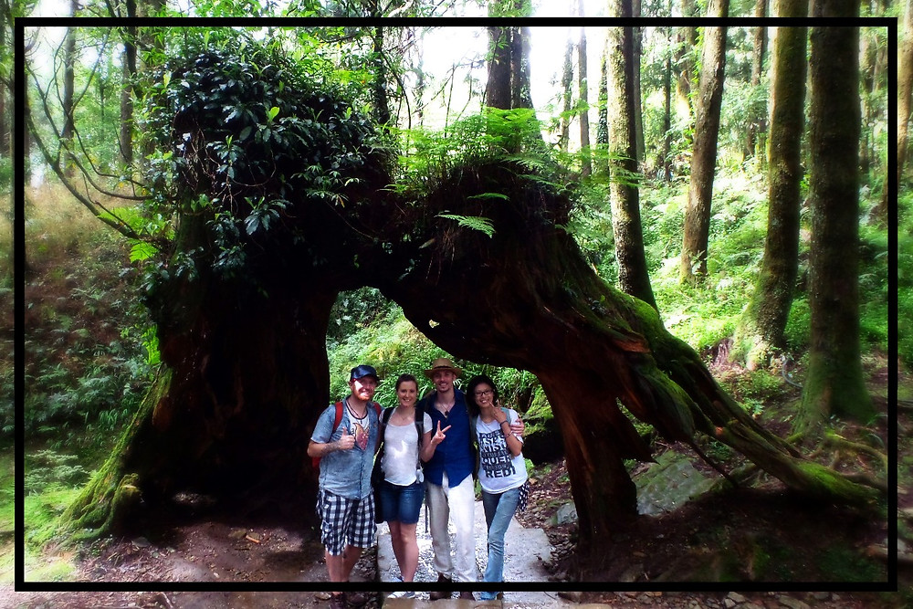 Nate, Hannah, Mark and Shana under a giant stump in Ali Shan forest