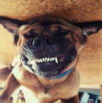 Cheese! Humphrey the hound in Perth WA
