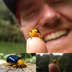 Yellow shield bug macro in Taiwan