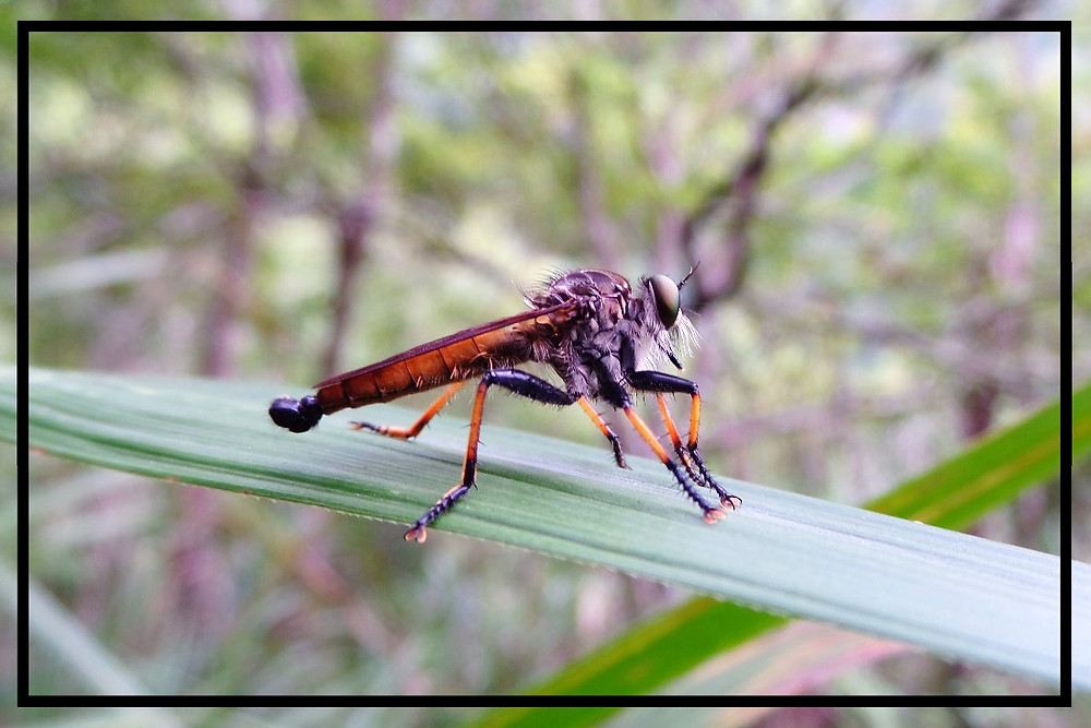 A native insect at Taroko Gorge