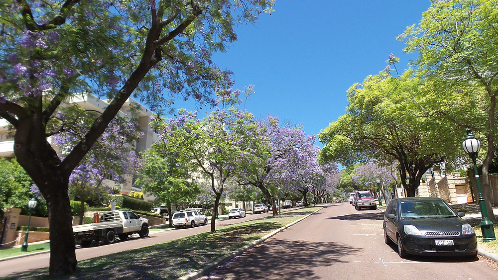 A Perth street in summer