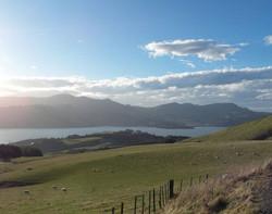 Otago peninsula New Zealand
