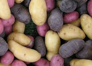 Fingerling Medley Potatoes