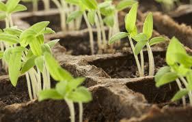 Garden Starts for 2020