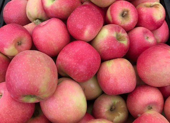 Pink Lady Apples, Bulk