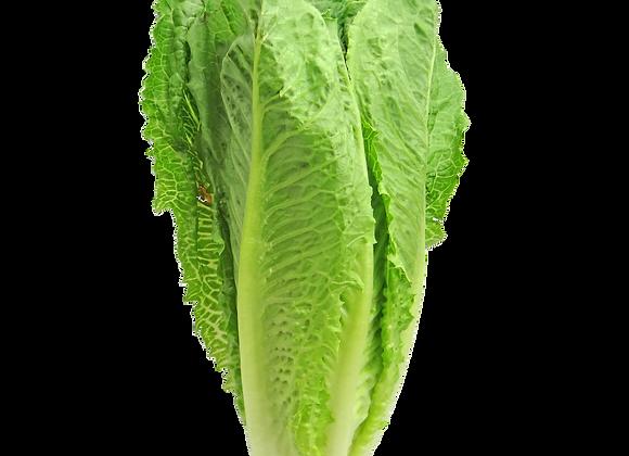 Romaine leaf