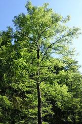 01 - Die Waldfrau im Baumgarten