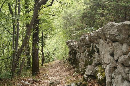 wald_kroatien.jpg